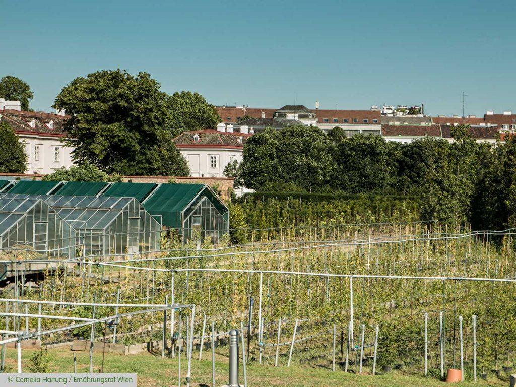 Stadt-Landwirtschaft